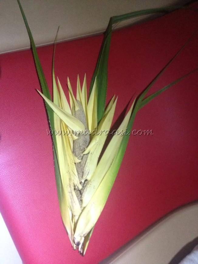 screw pine flower   Madraasi - - 121.7KB