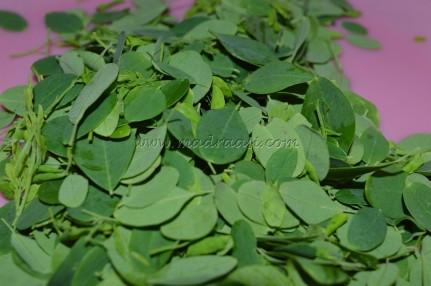 Cleaned moringa leaves