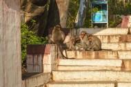 Sleeping Monkeys